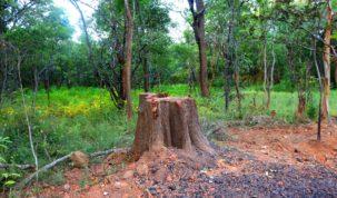 Déforestation, Katanga