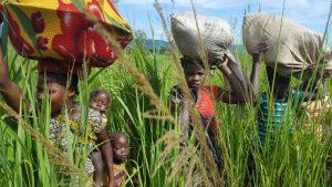 Déplacés internes, Pweto, Population africaine, Triangle de la mort