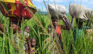 Déplacés internes, Pweto, Population africaine