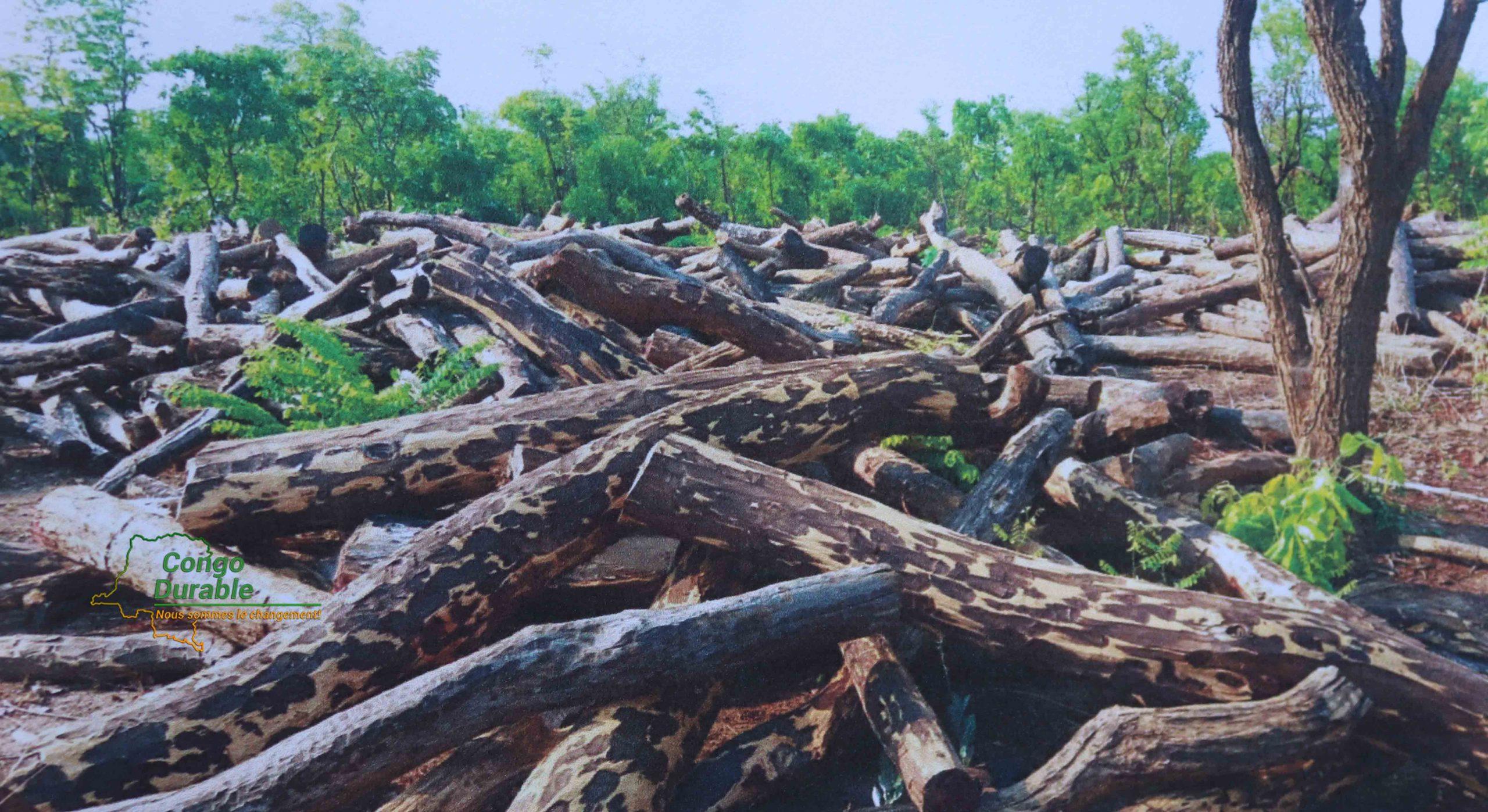 Bois rouge (Mukula)